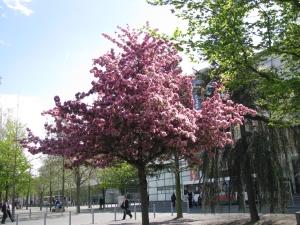 Vista en primavera del Hannover Messe, Campo ferial.