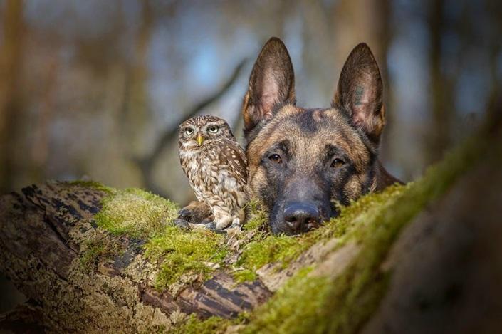 la_extra_a_amistad_de_un_perro_y_un_buho