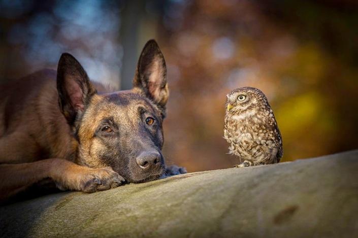 la_extra_a_amistad_de_un_perro_y_un_buho_10
