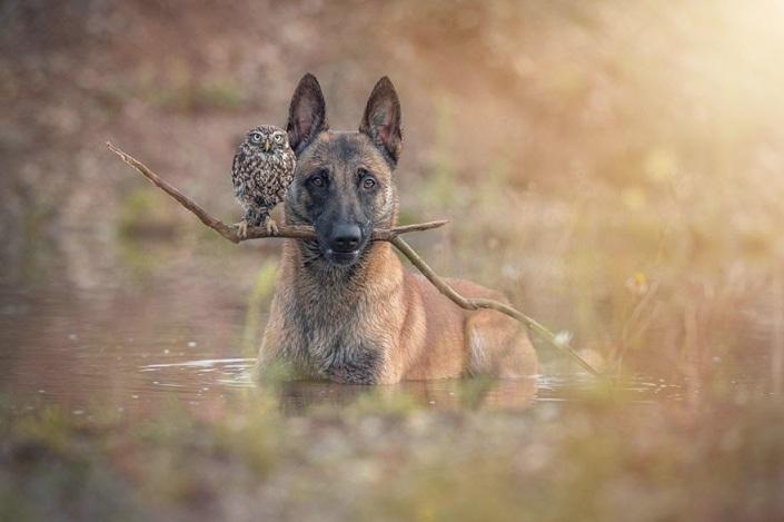 la_extra_a_amistad_de_un_perro_y_un_buho_2