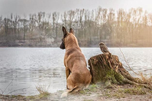 la_extra_a_amistad_de_un_perro_y_un_buho_20