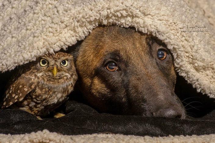la_extra_a_amistad_de_un_perro_y_un_buho_3