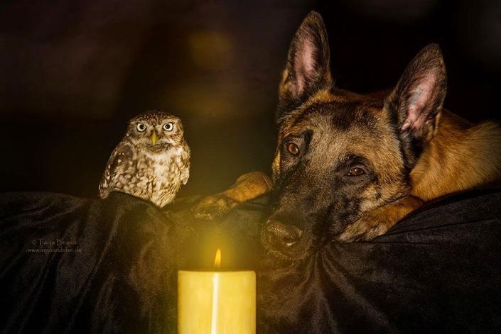 la_extra_a_amistad_de_un_perro_y_un_buho_5