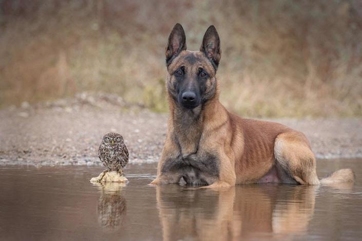 la_extra_a_amistad_de_un_perro_y_un_buho_6