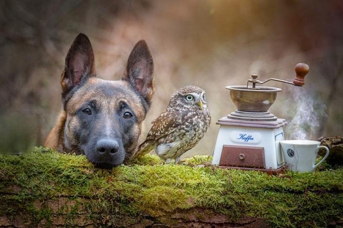 la_extra_a_amistad_de_un_perro_y_un_buho_7