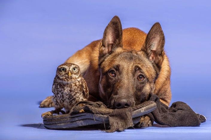 la_extra_a_amistad_de_un_perro_y_un_buho_9